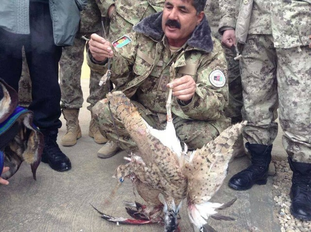 The unfortunate, and unexploded, houbara, mistaken for a 'Taleban operative'. Photo: Khaama Press
