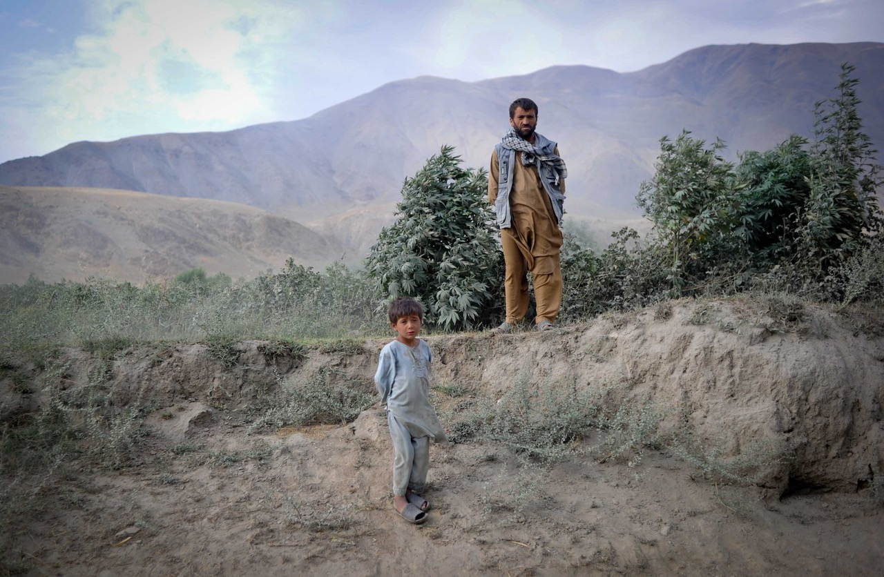 The Myth of 'Afghan Black' (1): A cultural history of cannabis cultivation and hashish production in Afghanistan - Afghanistan Analysts Network - English