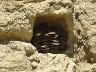 Dung cakes (chalma) are still widely used in rural areas of Bamyan, here stored in a cave. Photo: Thomas Ruttig.